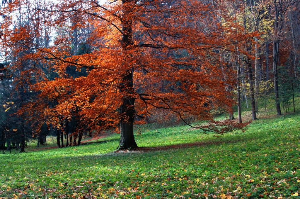 Beautiful quiet park in bright autumnal colors